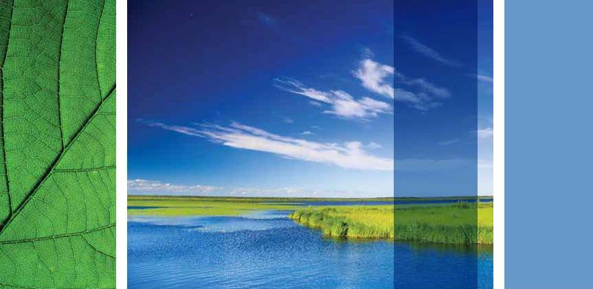 NSF Sustainability green image